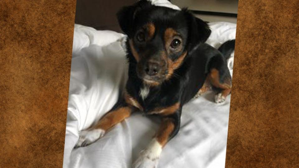 hond-denny-nicolai-u-nited-detachering