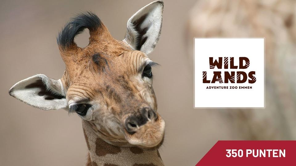wildlands-u-nited-awards